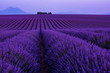 Leinwanddruck Bild - colorful sunset at lavender field