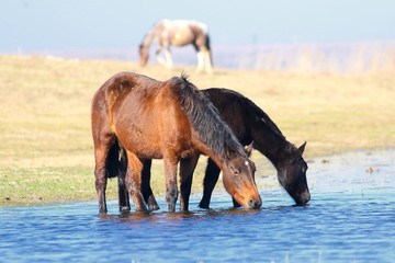 Two horses drink on the watering place
