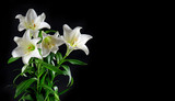 Lily flowers bouquet black background White blossoms