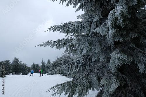 fototapeta na ścianę Magistrala Izerska na nartach biegowych