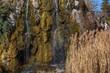 canvas print picture - Kleiner Wasserfall und Schilf im Frühling an einem Teich im Park