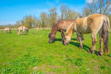 Horses in a field below a blue sky in a natural park in spring