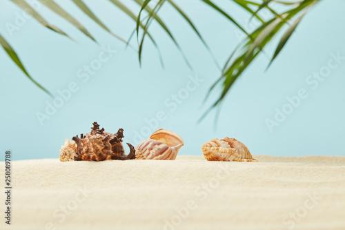 selective focus of seashells on sandy beach near green palm leaves on blue