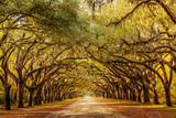 Fototapeta Sawanna - Wormsloe park, life oak tree alley, Savannah © Martina