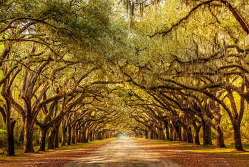 Wormsloe park, life oak tree alley, Savannah