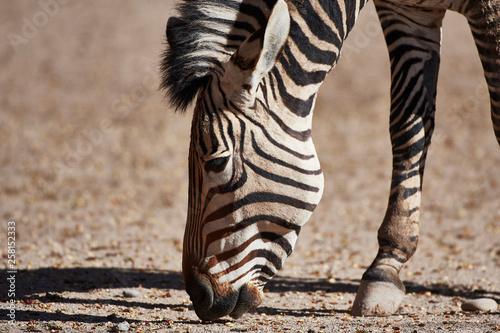 Wildlife - 258152333