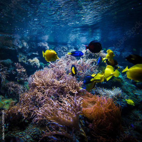 fototapeta na ścianę underwater coral reef landscape with colorful fish
