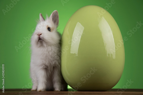 Bunny, rabbit and easter eggs on green background © Sebastian Duda