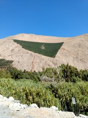 landscape with vineyard, mountains and blue sky pisco elqui chile south america © Laerte