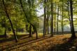 canvas print picture - Buchenwald im Gegenlicht, Nordrhein-Westfalen, Deutschland, Europa