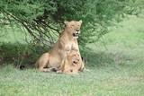 leonessa + baby