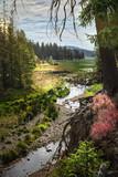 Fototapeta Fototapeta las, drzewa - Traumlandschaft mit wildem Bachlauf © Lilli