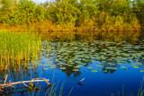 Fototapeta Fototapeta las, drzewa - closeup beautiful summer river landsape © Yuriy Kulik