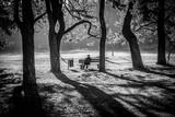 Fototapeta Forest - Relaks © Damian