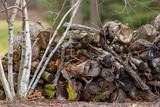 Firewood by River Birch 5341