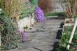 canvas print picture - Weg durch den Garten