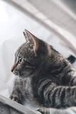 Cute home kitty