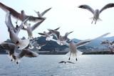 カモメ 熱海