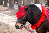 Fototapeta Fototapety z końmi - pony in winter Park © alexbush