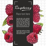 raspberry fruit vector menu design templates. Vector fruit illustration with hand drawn doodles for greeting card, banner