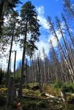 Fototapeta Forest - Las © kruffka