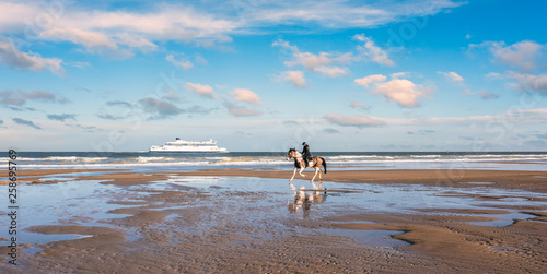 canvas print picture cheval au galop sur la plage