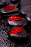 Spa black stones with petals of red gerbera