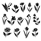 Set of silhouettes of flowers camomile, rose, tulip, lily, iris, daisy, campanula, wild flowers, vector, black  color, isolated on white background