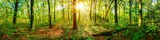 Fototapeta Fototapeta las, drzewa - Beautiful forest panorama in spring with bright sun shining through the trees © John Smith
