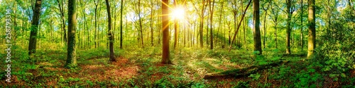 Beautiful forest panorama in spring with bright sun shining through the trees - 258793314