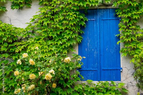 Leinwanddruck Bild Blaues Fenster mit gelber Rose