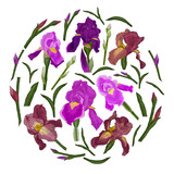 Iris flowers, leaves and buds in a circle. Elements for botanical ornament. Vector image of purple and red iris on a white background.