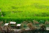 Fototapeta Bambus - Bamboo table and chairs near green rice farm © oppdowngalon