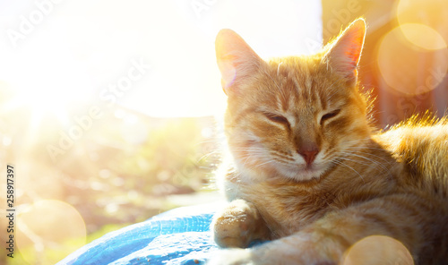 relaxed and happy cat gets pleasure basking in the spring sun - 258917397