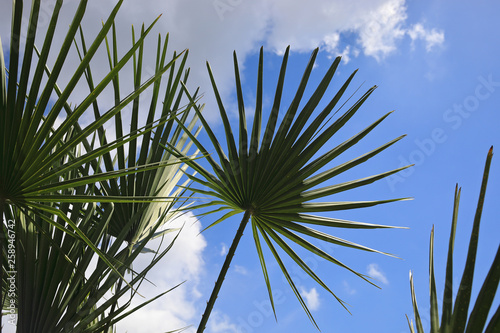 Leaves of tropical plants against the blue sky