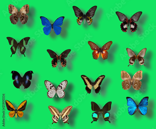 collection of different butterflies on a green background © yurakp