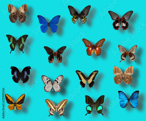 collection of different butterflies on a light blue background © yurakp