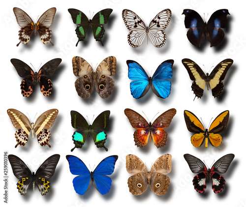 collection of different butterflies on a white background © yurakp