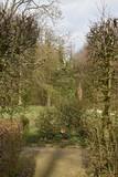 Fototapeta Room - Dzewa i krzaki w parku © 120iwonka