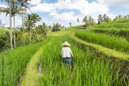 Leinwandbild Motiv Female farmer working in beautiful Jatiluwih rice terrace plantations on Bali, Indonesia, south east Asia.