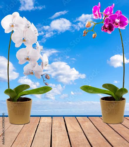 Orchidées sur terrasse - 259060554