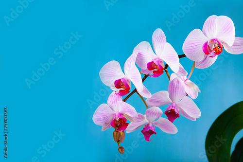 Beautiful pink orchid closeup. - 259071363