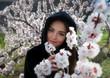 canvas print picture - Frühlingsportrait zwischen Marillenblüten