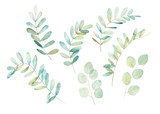 Watercolor greenery set. Botanical winter illustration with eucalyptus branch. Vintage hand drawn print - 259085987