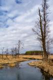 Fototapeta Bathroom - Dolina Narwi. Rzeka Łoknica,Podlasie, Polska © podlaski49
