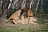 Reproduction lion
