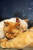 Tender friendship and love of two homeless cats: orange and white cats portrait close-up. Sick Pets.