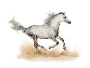 Dapple gray arabian stallion running