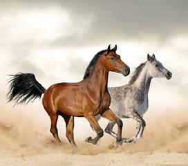 Horses in desrt