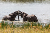 Two elephants playing in the water